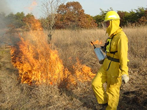 Wildlife biologists conducting a burn
