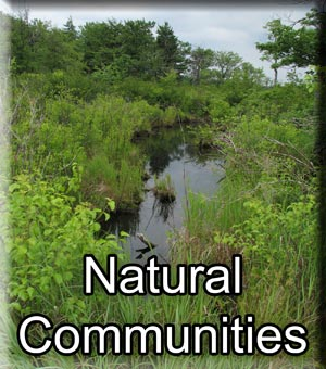 Natural Communities
