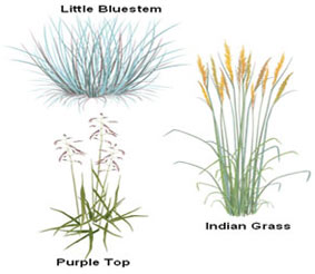 Illustration of dry meadow plants