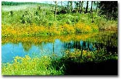 A scene from streamside with the wildflowers in bloom.