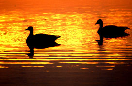 Two ducks enjoying the sunset at one of the marsh areas