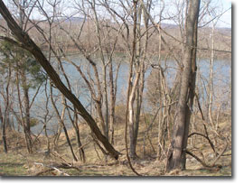 Photo of Prathers Neck WMA where it overlooks the Potomac River