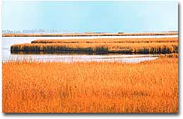 The terrain of Taylor's Island, marsh grass and shallow water abounds.