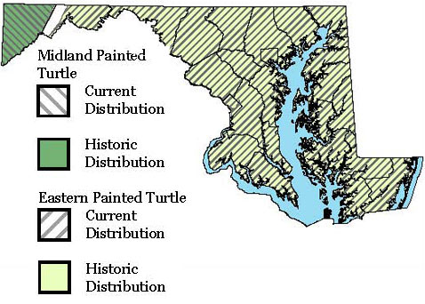 Maryland Distribution Map for both Eastern Painted Turtle and Midland Painted Turtle